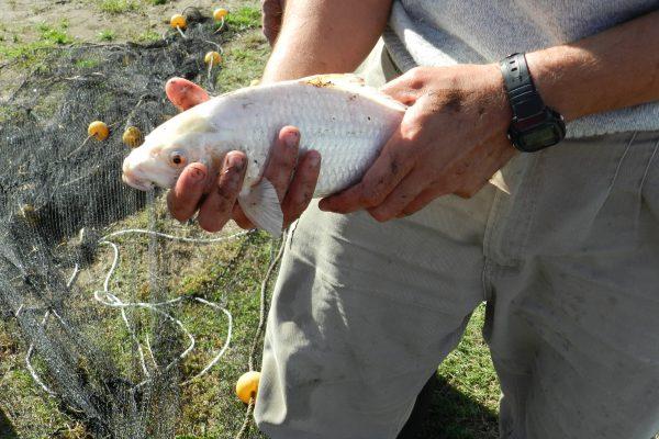 poblaciones-de-peces
