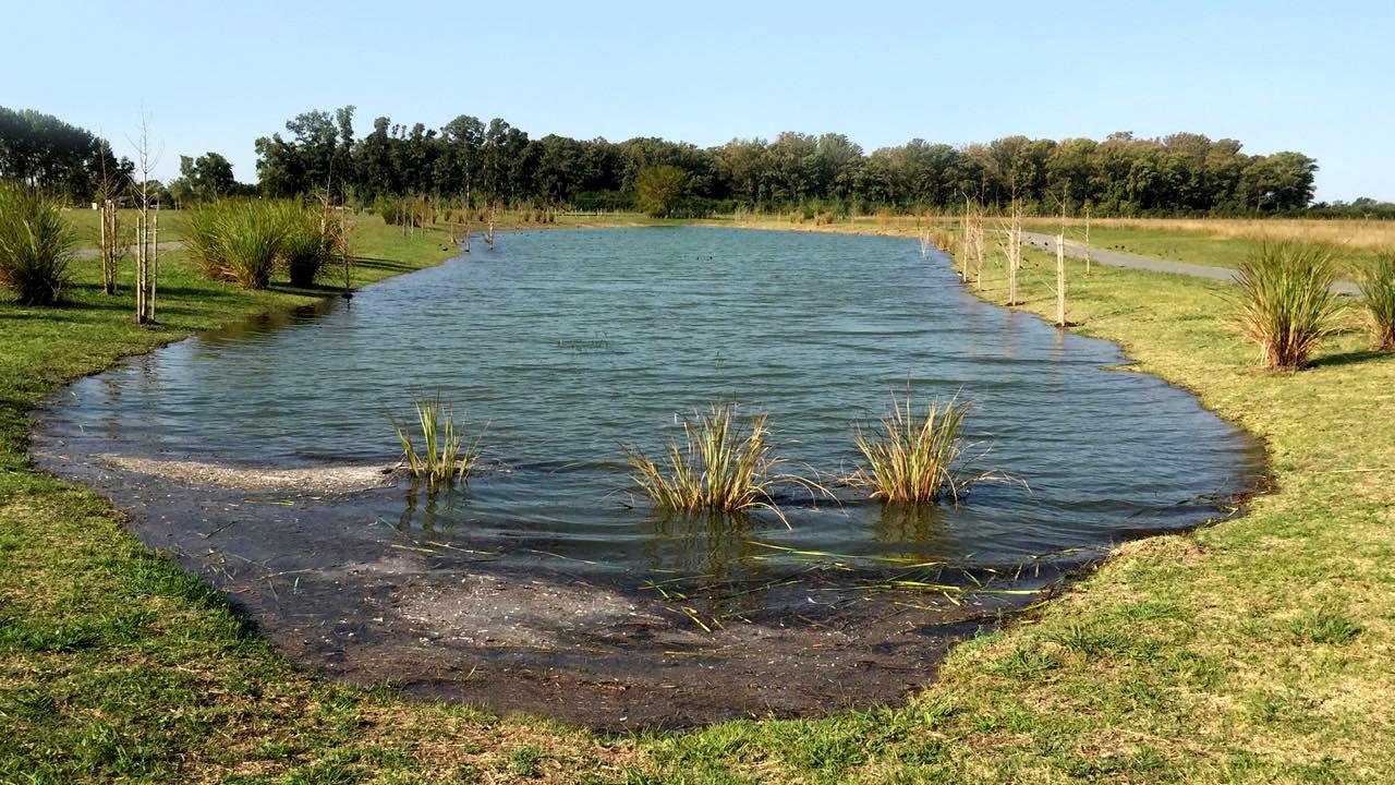 Campos: ¿Es rentable el control de vegetación acuática en lagunas?
