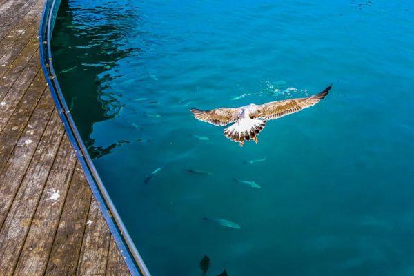 animal-avian-beach-459840