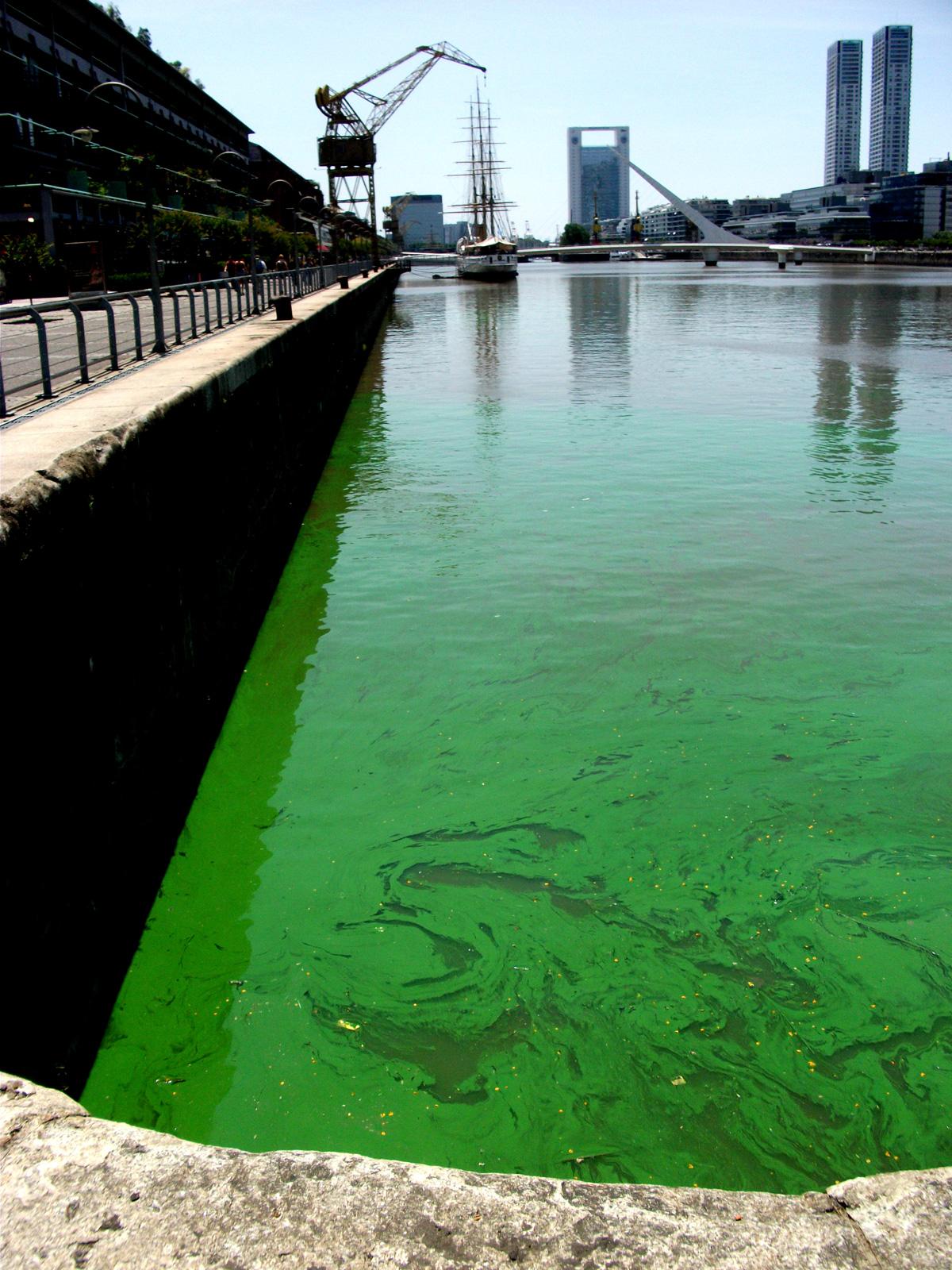 Algas Tóxicas. Un desafío.