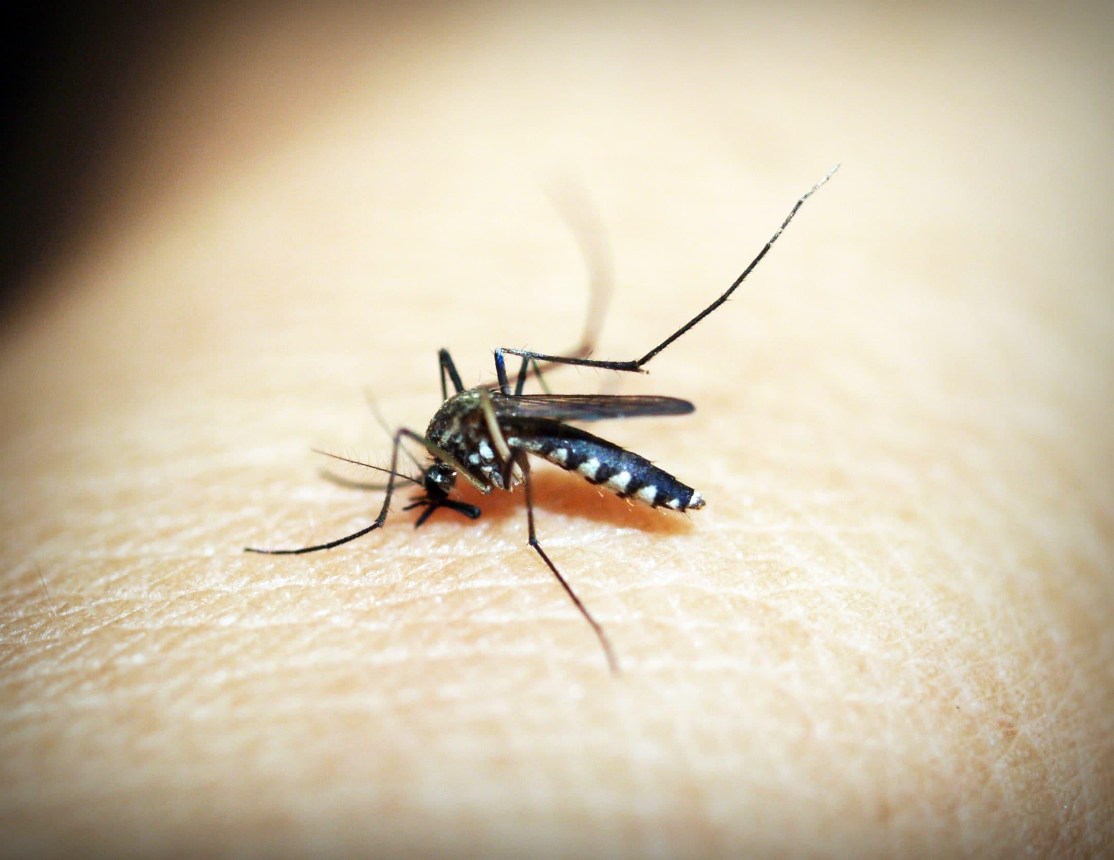 Todo lo que hay que saber del Zika